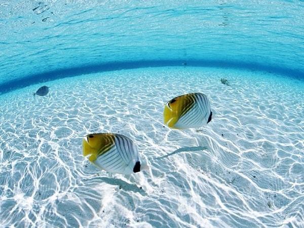 Mơ thấy cá bơi trong nước có điềm báo gì? đánh con gì?