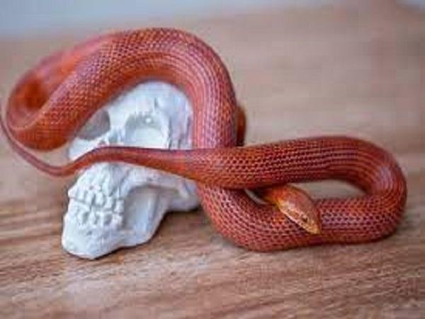 Mơ thấy rắn đỏ đánh con gì và ý nghĩa như thế nào?