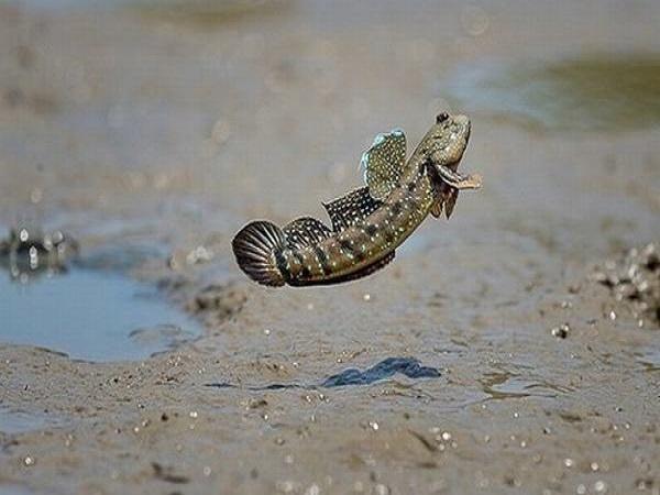 Mơ thấy cá trên cạn có điềm báo gì và đánh con gì trúng?