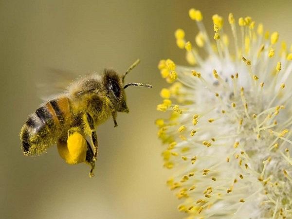 Mơ thấy ong đánh con số nào? Ý nghĩa mơ thấy con ong?